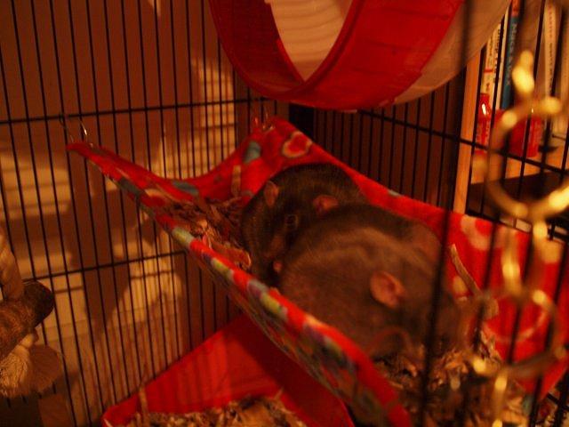 Rowan and Tamar in a red hammock full of shredded cardboard bedding
